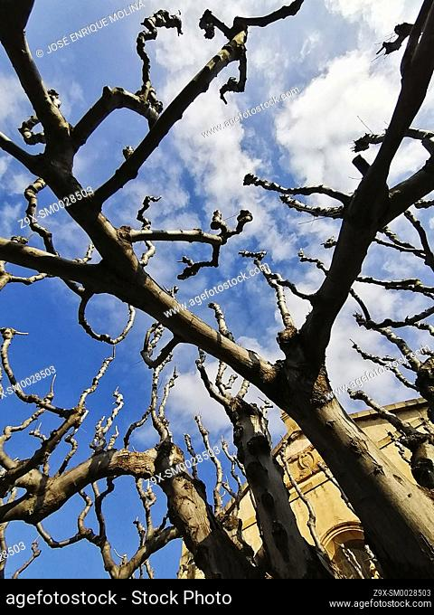 Winter trees in the town of Alella, Barcelona, Spain