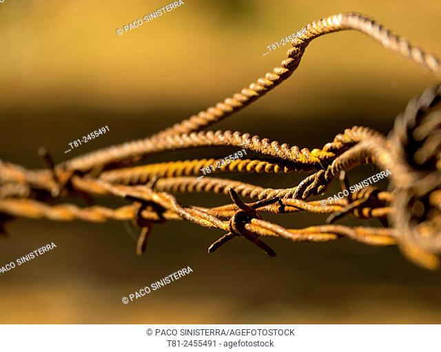 Old rusty wire fencing, Castellon, Spain