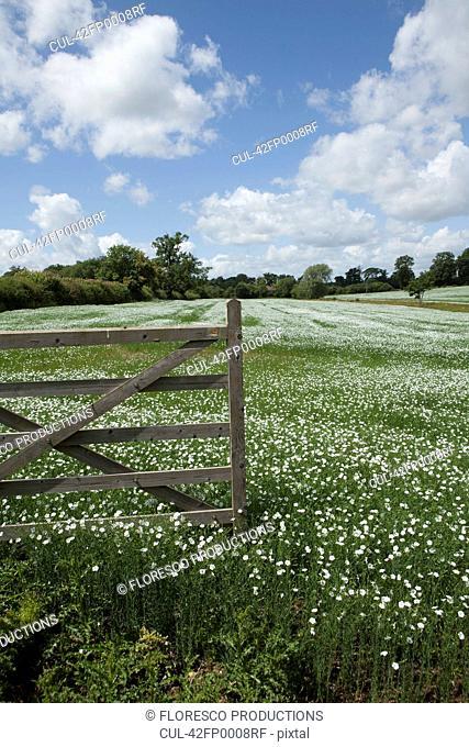 Wooden fence in field of flowers