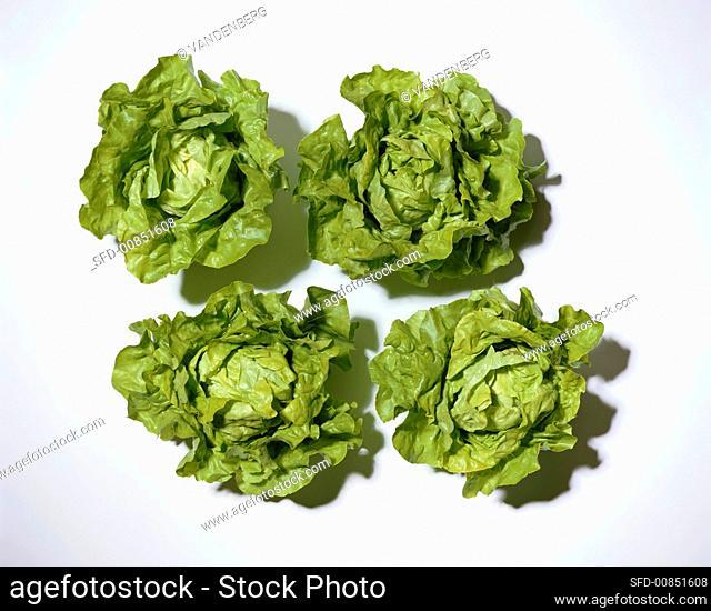 Four lettuces