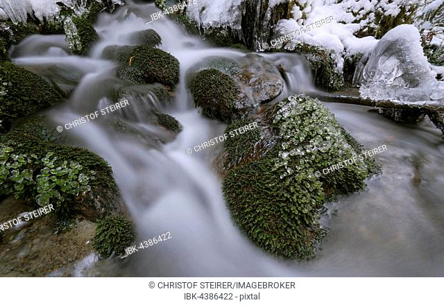 Mountain stream with ice and snow in winter, Stubai Valley, Tyrol, Austria