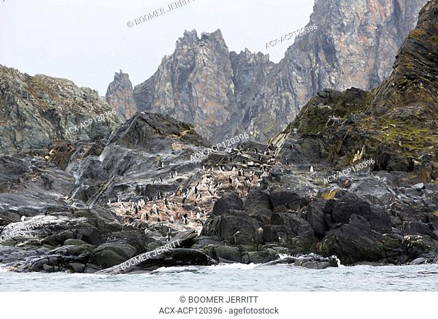 A colony of Chinstrap Penguins (Pygoscelis antarcticus) nests on the inhospitable shores of Elephant Island. South Shetland Islands, Antarctica