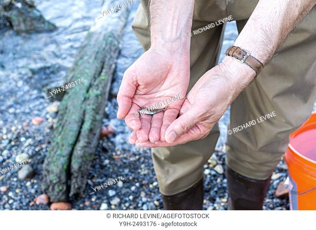 Naturalists from the NYS Dept. of Environmental Conservation display and explain about the samples of fish collected at the Brooklyn Bridge Park site during the...