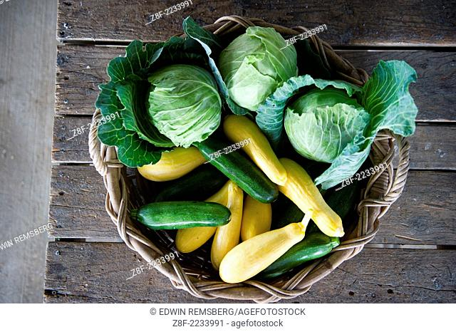 Basket of cabbage, squash and zucchini