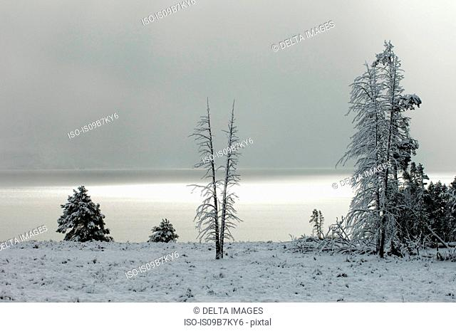 Yellowstone Lake after snowfall, Yellowstone National Park, Wyoming, USA