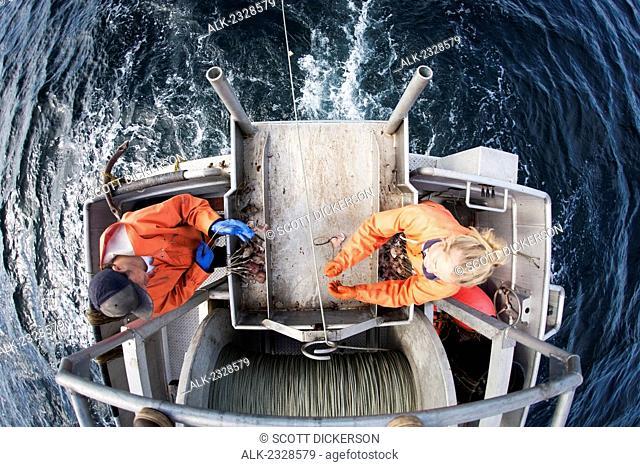 Deckhands snap hooks onto the groundline while setting out commercial halibut longline gear, Southwest Alaska, summer