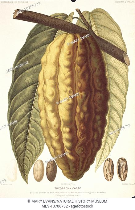 Illustration from the Botany Library Plate Collection held at the Natural History Museum, London