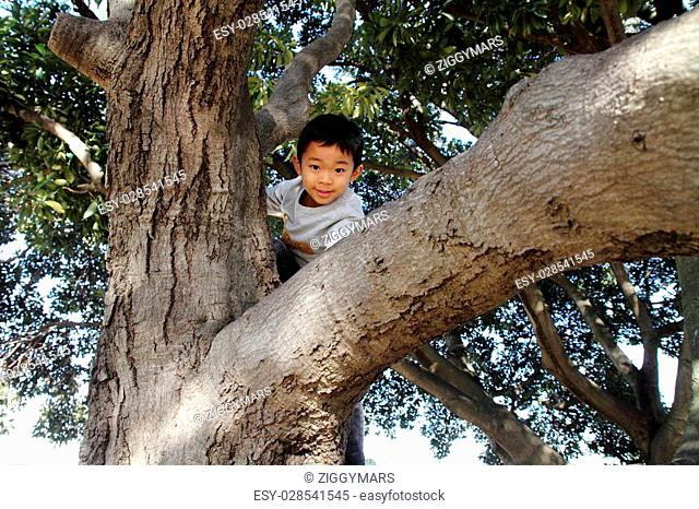 Japanese boy climbing the tree (6 years old)