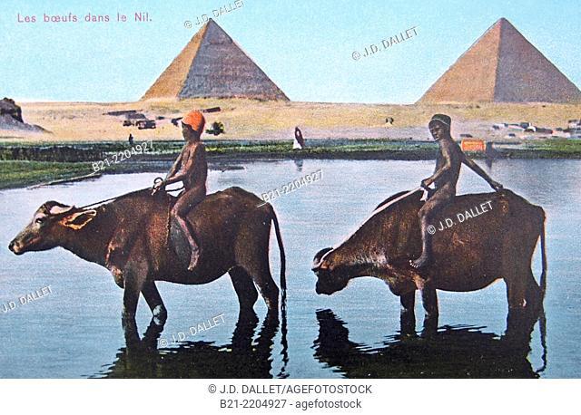 Old postcard c. 1900: Gizeh pyramids, Egypt
