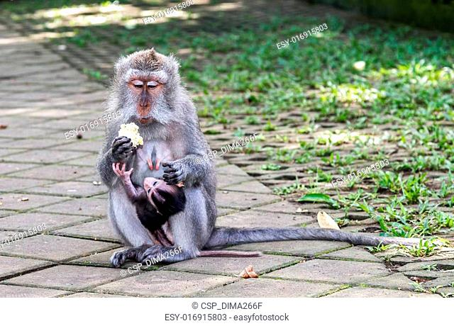 Mother and baby monkey eating