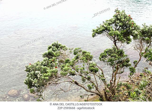 Ilheu de Vila Franca do Campo is a crater in the Atlantic ocean Sao Miguel Azores islands Portugal