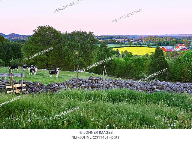 Green landscape with cattle in pasture
