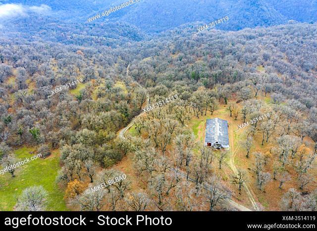 Deciduous forest and hut. Aerial view. Aranarache area. Navarre, Spain, Europe