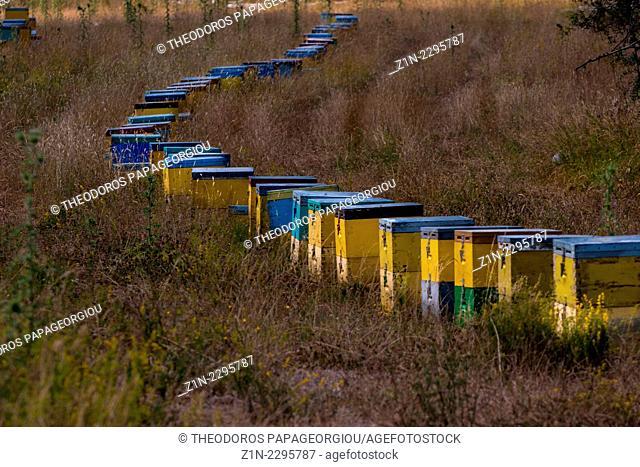 Beehives on mount Menalon. Arcadia, Peloponnese, Greece