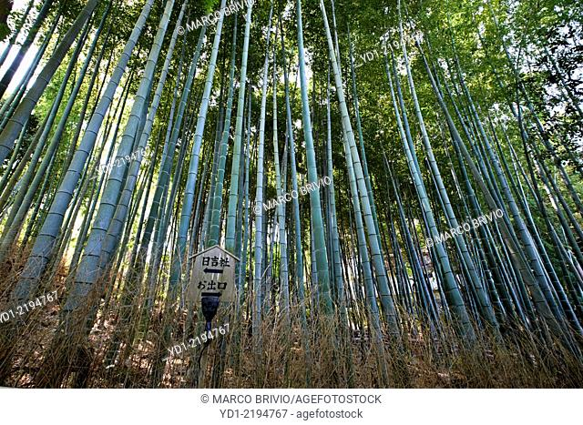 Grove Of Bamboo Plants Stock Photos And Images Age Fotostock