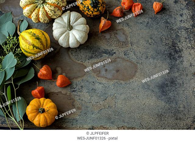 Autumnal decoration, ornamental pumpkins