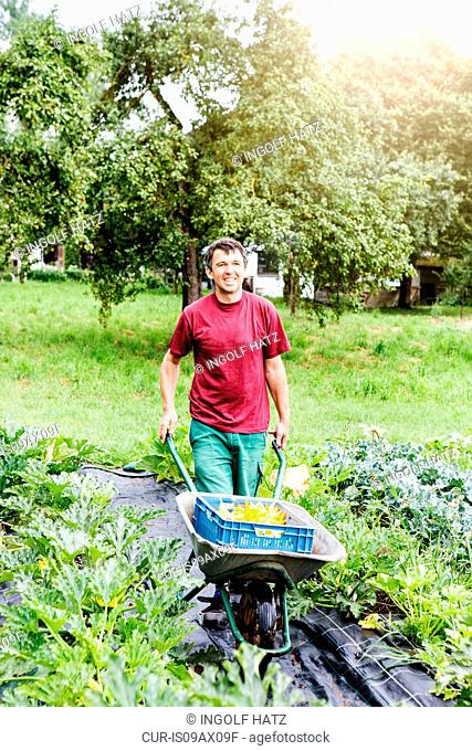 Farmer pushing wheelbarrow in organic farm