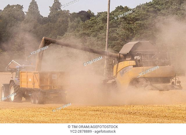 A New Holland combine harvester emptying corn into a trailer in a field in Norfolk , England , Britain , Uk