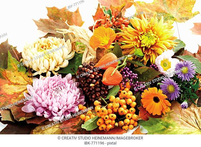 Autumn decoration: firethorn berries, beautyberries, chrysanthemums, Chinese lanterns, autumn asters, pot marigolds and colourful autumn leaves