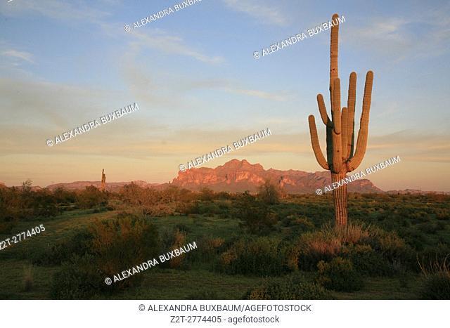 Saguaro and Superstition mountains in Mesa, Arizona