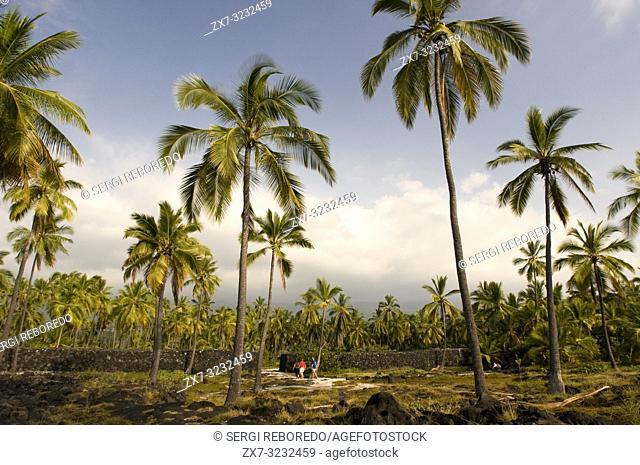 Royal Gardens. Pu'uhonua o Honaunau National Historic Park. Big Island. Hawaii. Up until the early 19th century on Big Island
