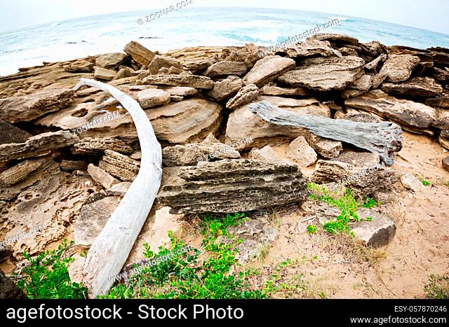 blur in south africa  branch dead tree coastline of st lucia and winter season