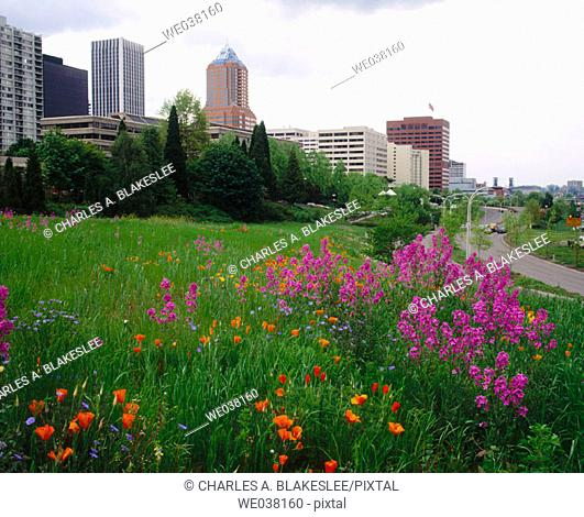 Wildflowers blooming on hillside in downtown Portland. Multnomah County, Oregon, USA