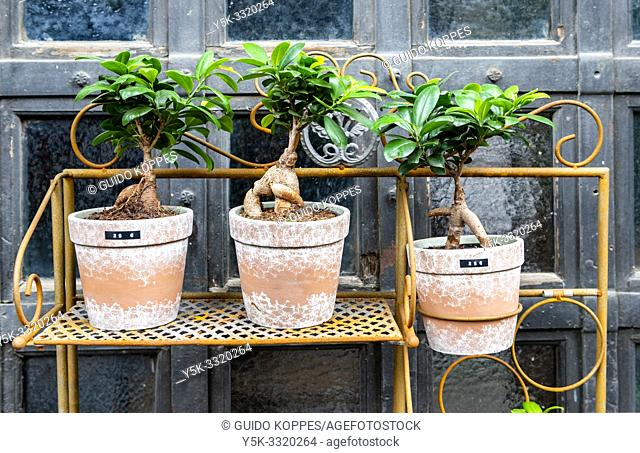 Berlin, Germany. Rack of fresh plants for sale, aimed at decoration of a residential home or office