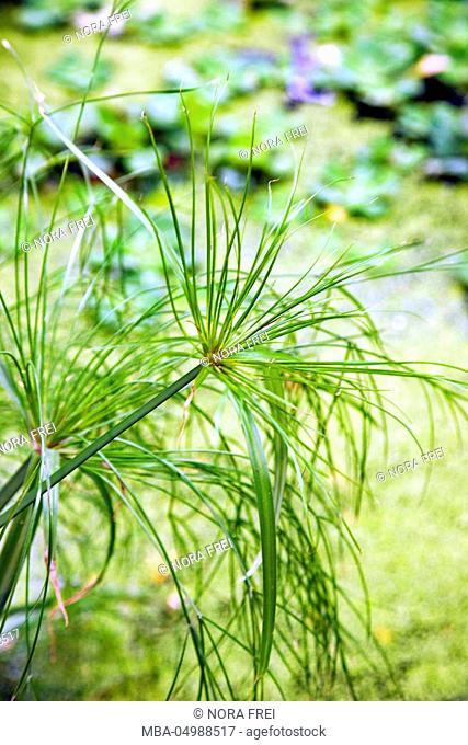 Water, plants, acquatic plant, flora