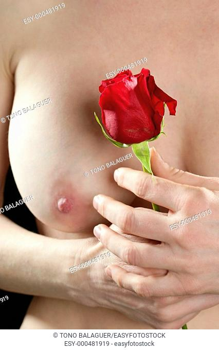 Beautiful woman body holding in hand a red rose