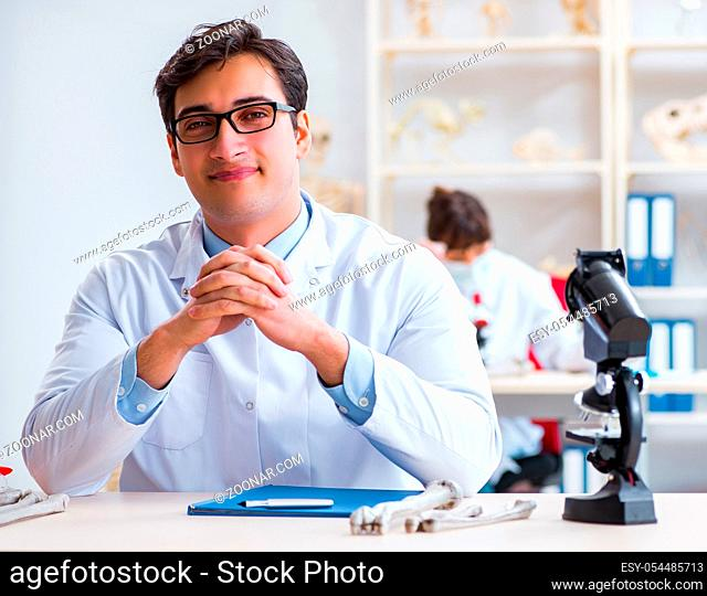 The professor studying human skeleton in lab