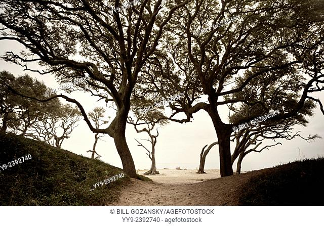 Path to Driftwood Beach - Jekyll Island, Georgia USA