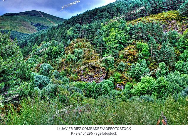 Forest. Santa Cruz del Valle Urbion. Sierra de la Demanda. Burgos Province. Castilla y Leon. Spain