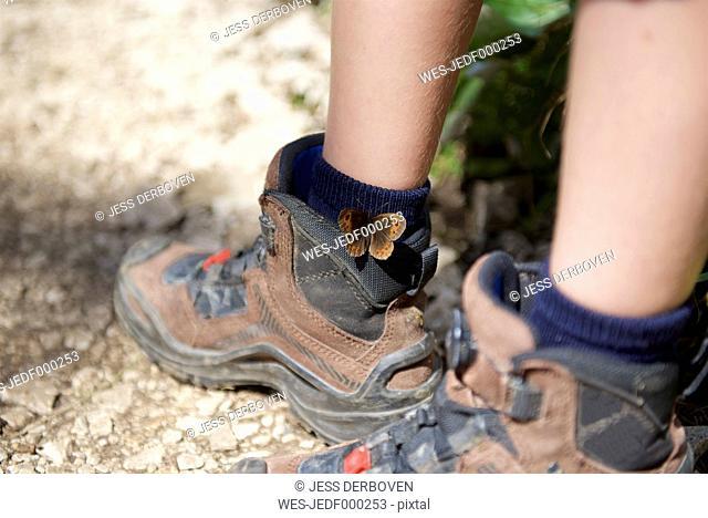 Butterfly Meadow Brown on boy's hiking shoe