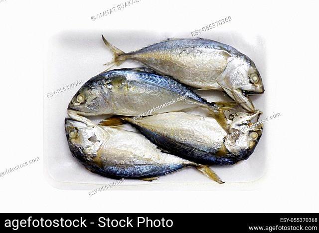 Raw mackerel fish steamed in foam tray, Platow, pla2, with plastic wrap foam