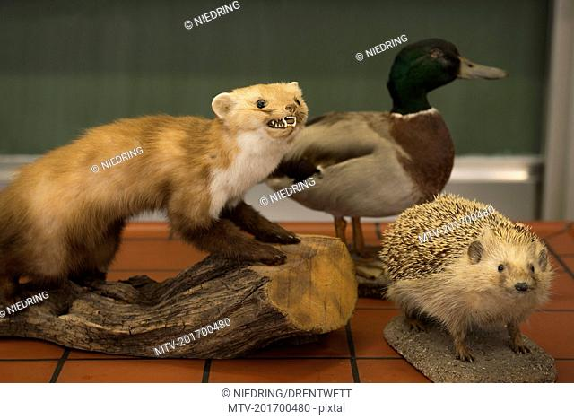 Stuffed animals for experiments in a biology class, Fürstenfeldbruck, Bavaria, Germany