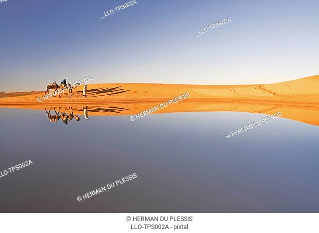 Berber Man with Tourist on a Dromedary Camel Camelus dromedarius Walking Along a Waterhole, their Image Reflected on the Water  Merzouga, Erg Chebi
