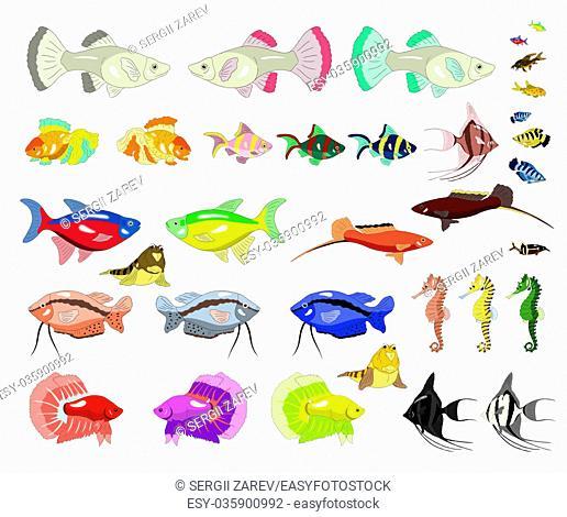 Set of Aquarium Fish separate images. Digital painting full color cartoon style illustration isolated on white background