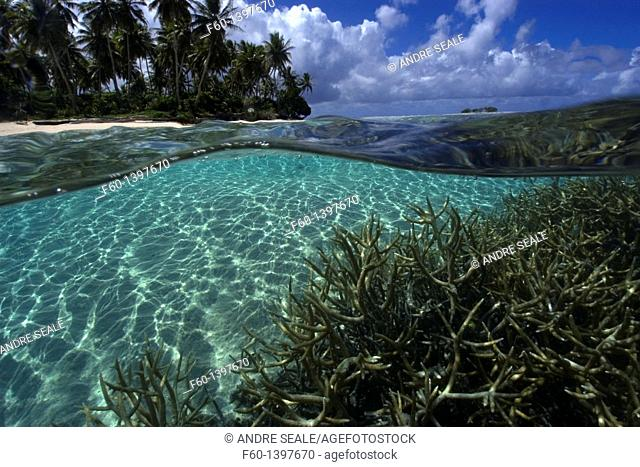 Split image of staghorn coral, Acropora sp , and island, Truk lagoon, Chuuk, Federated States of Micronesia, Pacific