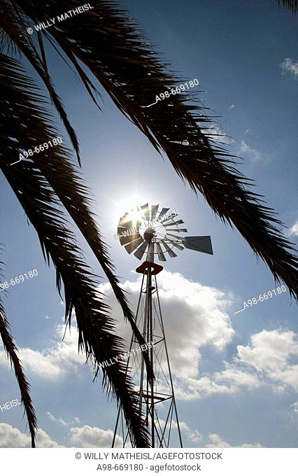 windmill and palm tree in Fuerteventura, Spain