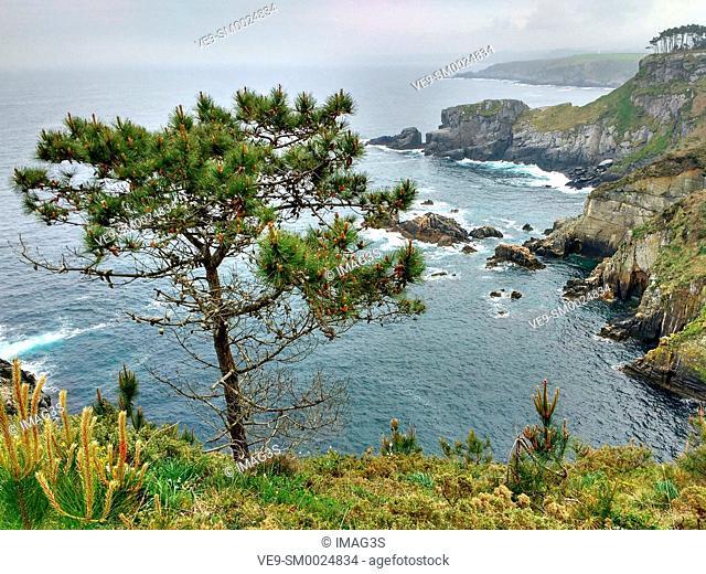 Cliffs near Luarca, Valdés municipality, Asturias, Spain
