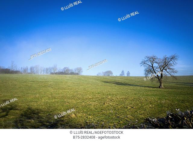 Rural landscape with trees and blue sky with haze. Skipton, North Yorkshire, England, UK