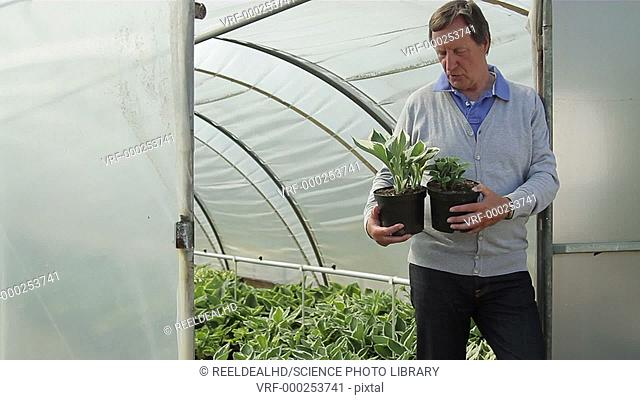 Man holding plants in front of greenhouse
