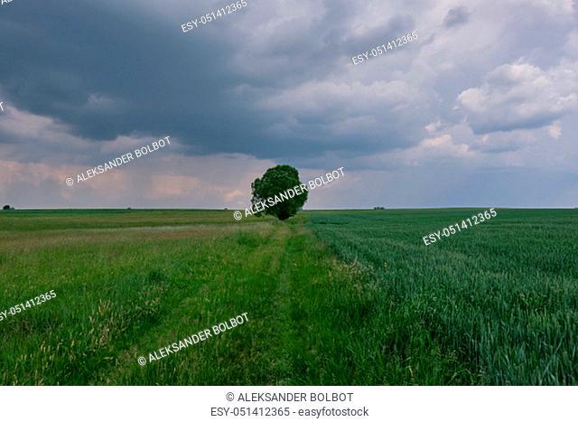 Grassy meadows amd field in Podlasie Region before storm, Podlasie region, Poland, Europe