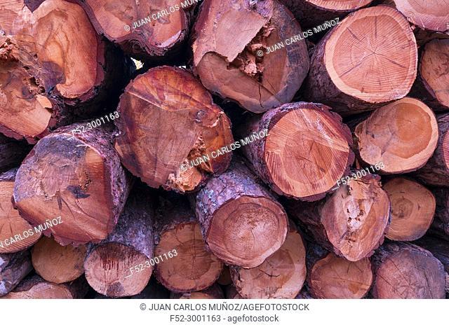 """Certified wood, SCOTS PINE (Pinus sylvestris), Parque Natural """"""""Laguna Negra y Circos Glaciares de Urbión"""""""", Soria province, Castilla y Leon, Spain, Europe"""