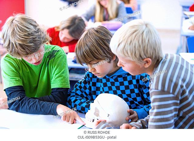 Boys in classroom, sitting at desk, looking at model of skull