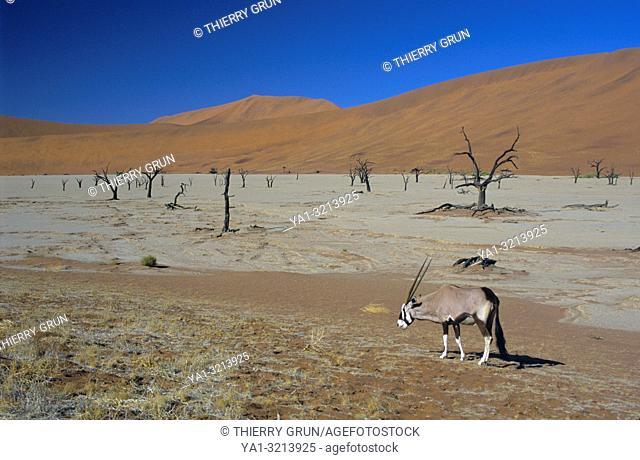 Namibia, Namib-Naukluft National park, Sossusvlei, Dead vlei and gemsbok (oryx gazella)