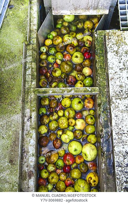 Washing the apples before centrifugation to produce the cider must. Sidrería Urbitarte, Ataun, Guipuzcoa, Basque Country, Spain