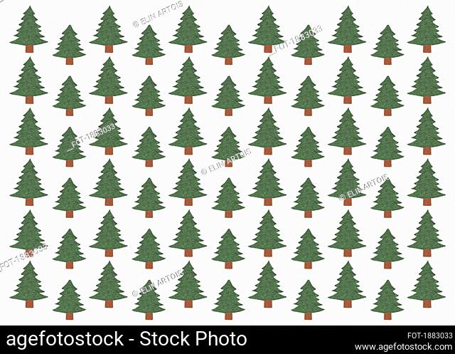 Illustration of green Coniferous forest