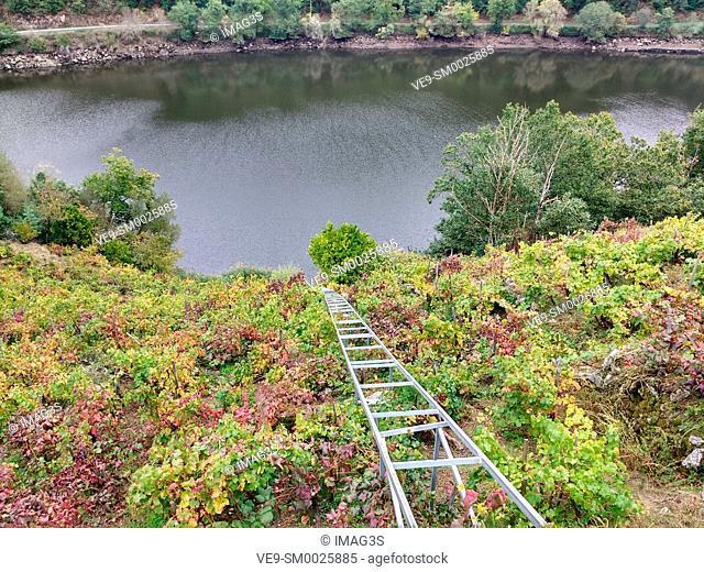 'Mencía' variety vineyards in autumn, and Belesar in background, Chantada municipality, Ribeira Sacra, Lugo, Spain